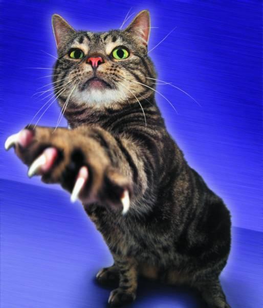 Кошки на рабочий стол кошки обои для